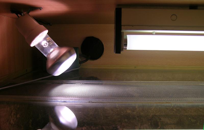 beleuchtung und beheizung terrarienhaltung schlangenwelt. Black Bedroom Furniture Sets. Home Design Ideas